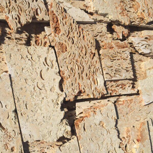 Piatra cochilifera fragmentata 1.2 cm
